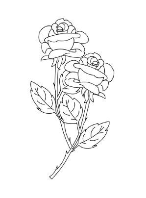 Ausmalbilder Rosen 8 Rosen Malvorlagen
