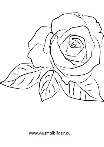 rosen malvorlagen   coloring and malvorlagan
