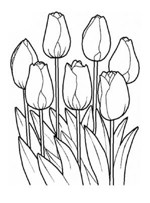 ausmalbilder tulpen 8 kostenlos ausdrucken
