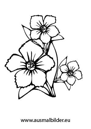 Ausmalbilder Blüten - Blumen Malvorlagen ausmalen