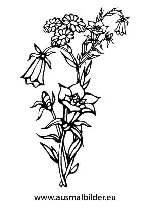 Ausmalbilder Blumen - Blumen Malvorlagen ausmalen