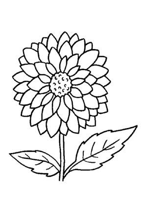 Ausmalbilder dahlie 2 - Blumen Malvorlagen ausmalen