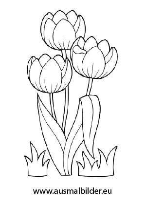 Ausmalbilder Drei Tulpen - Blumen Malvorlagen ausmalen