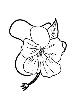 Ausmalbilder Hibiskus 1 - Blumen Malvorlagen ausmalen