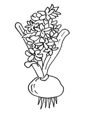 Ausmalbilder Hyazinthe - Blumen Malvorlagen ausmalen