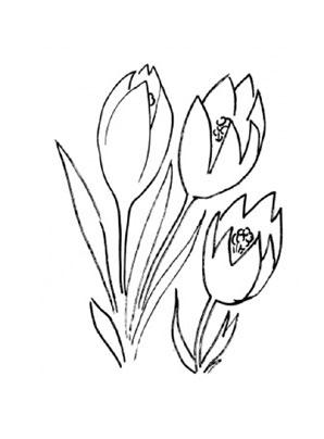 Ausmalbilder Krokus 2 - Blumen Malvorlagen ausmalen
