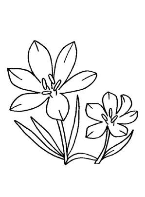 Ausmalbilder Krokus 3 Blumen Malvorlagen Ausmalen