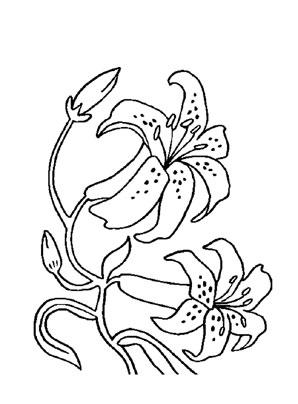 Ausmalbilder Orchideen 1 - Blumen Malvorlagen ausmalen