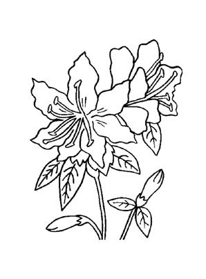 Ausmalbilder Rhododendron - Blumen Malvorlagen ausmalen