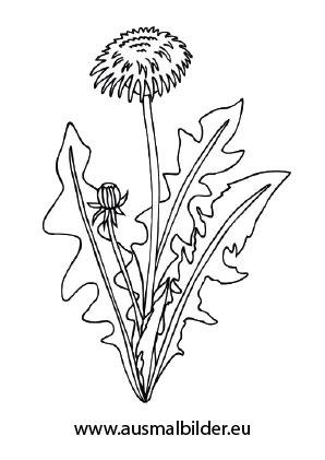Ausmalbilder Sonnenblume mit Blättern - Blumen Malvorlagen ausmalen