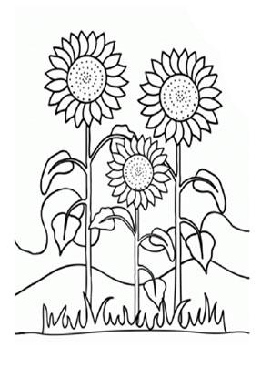 Ausmalbilder Sonnenblumen 1 - Blumen Malvorlagen ausmalen