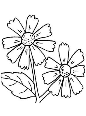 Ausmalbilder Sonnenbraut - Blumen Malvorlagen ausmalen