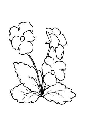 Ausmalbilder Stiefmütterchen 1 - Blumen Malvorlagen ausmalen