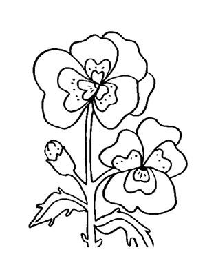 Ausmalbilder Stiefmütterchen 2 - Blumen Malvorlagen ausmalen