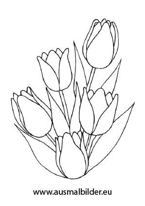 Ausmalbilder tulpenstrauß - Blumen Malvorlagen ausmalen