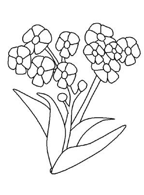 Ausmalbilder Vergißmeinnicht 2 - Blumen Malvorlagen ausmalen