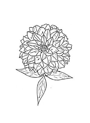 Ausmalbilder Zinnie 1 - Blumen Malvorlagen ausmalen