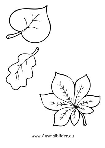 Ausmalbilder Laubblatter Herbst Malvorlagen