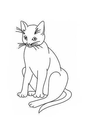 ausmalbild grosse katze zum ausdrucken