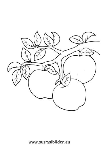 Ausmalbilder Äpfel am Ast - Obst und Gemüse Malvorlagen
