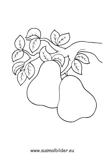 Ausmalbilder Birnen Am Ast Obst Und Gemüse Malvorlagen