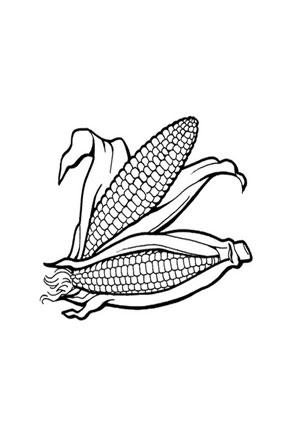 Ausmalbild Maiskolben Mit Blattern Kostenlos Ausdrucken
