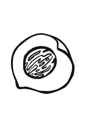 ausmalbilder pfirsichkern obst und gem se malvorlagen