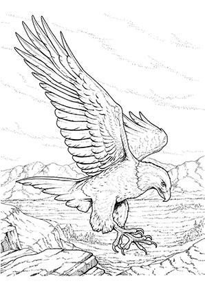Ausmalbilder Adler In Der Natur Adler Malvorlagen