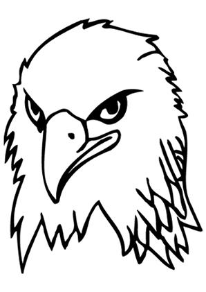 Ausmalbilder Adler Mit Grimmigem Blick Adler Malvorlagen
