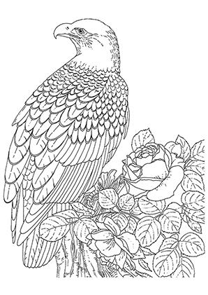 Ausmalbilder Adler Und Rose Adler Malvorlagen