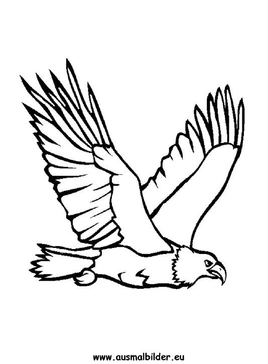 Ausmalbilder Adler Adler Malvorlagen