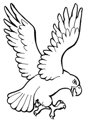 Ausmalbilder Landender Adler Adler Malvorlagen