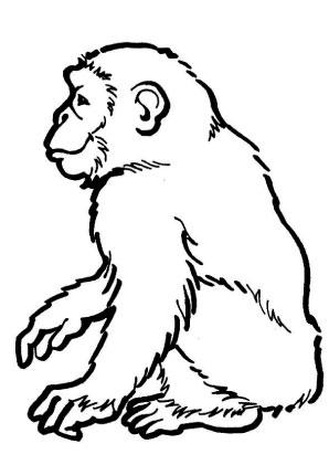 Fantastisch Affen Malvorlagen Für Kinder Fotos - Ideen färben ...