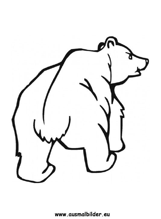 Ausmalbilder Bär Bären Malvorlagen
