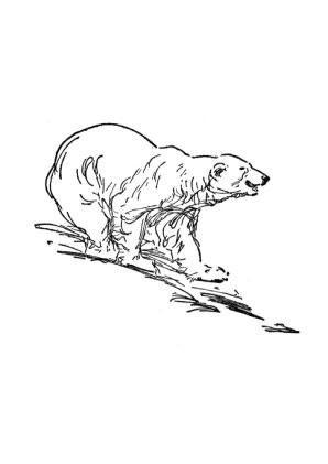 Ausmalbilder bären aufmerksamer bär bär bekommt ein geschenk bär