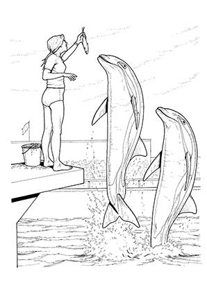Ausmalbilder Delphine in einer Delphinshow - Delphine Malvorlagen