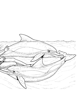 ausmalbilder delphine und ein taucher - delphine malvorlagen
