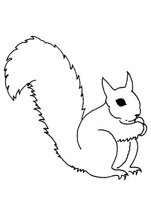 Ausmalbilder Eichhörnchen 1 - Eichhörnchen Malvorlagen