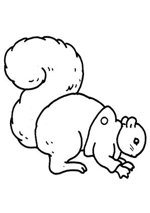 ausmalbilder eichhörnchen 3 - eichhörnchen malvorlagen