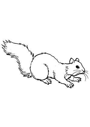 ausmalbilder eichhörnchen beim kriechen - eichhörnchen