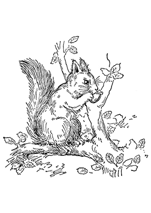Ausmalbilder Eichhörnchen Frisst Eine Nuss Eichhörnchen Malvorlagen