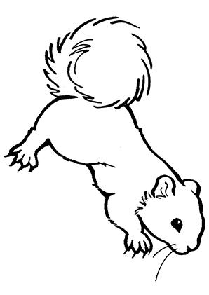 ausmalbilder eichhörnchen mit krallen - eichhörnchen