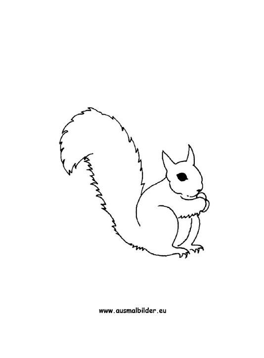 Ausmalbilder Eichhörnchen Eichhörnchen Malvorlagen