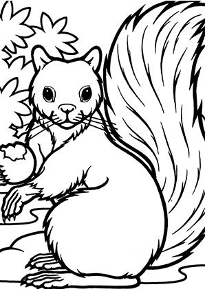 ausmalbilder erschrockenes eichhörnchen - eichhörnchen