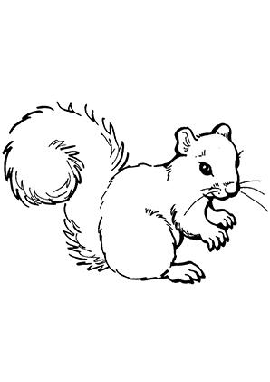 Ausmalbilder Süsses Eichhörnchen Eichhörnchen Malvorlagen