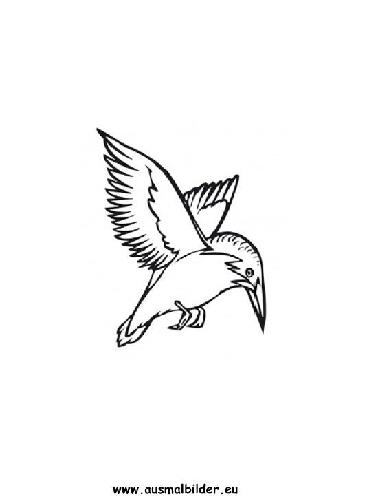 Ausmalbilder Eisvogel Eisvogel Malvorlagen