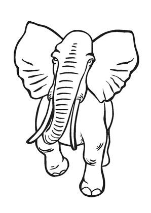 ausmalbilder alter afrikanischer elefant - elefanten