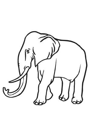ausmalbild elefant mit langem stosszahn kostenlos ausdrucken