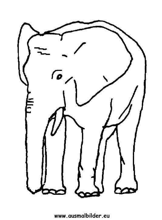 Ausmalbilder elefant - elefanten Malvorlagen