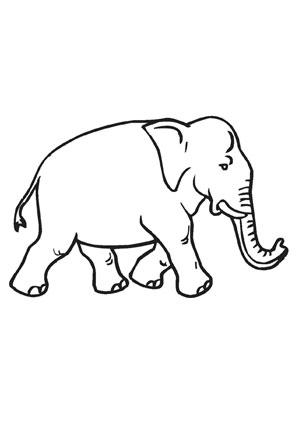 ausmalbilder elefant gratis